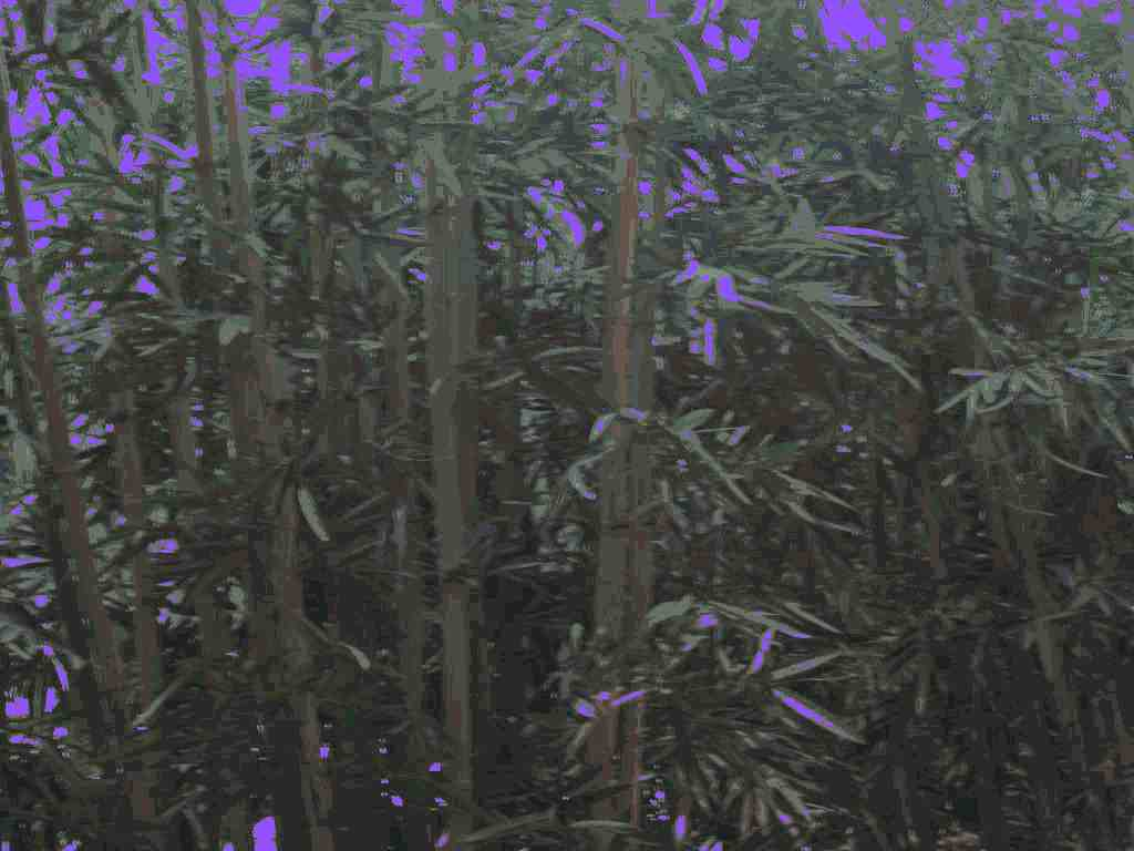Bamboo Forest at Mandalay Bay