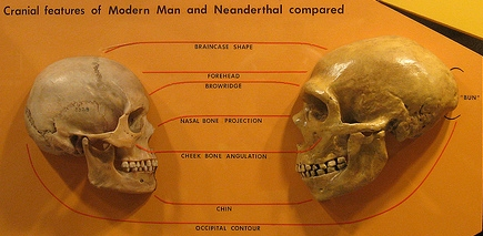 http://archure.net/p/Sapiens_neanderthal_comparison_CC_hairymuseummatt.jpg